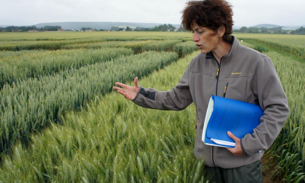 """Catherine Robillard nous explique les différences entre variétés de blé, ainsi que les pratiques mises en oeuvre pour les protéger : en plus du désherbage chimique, une action mécanique est de plus en plus menée, avec dans certains cas un guidage GPS : un traitement toujours plus précis, et donc moins intensif ou inutile, correspondant à un besoin et non à une """"éventualité""""."""