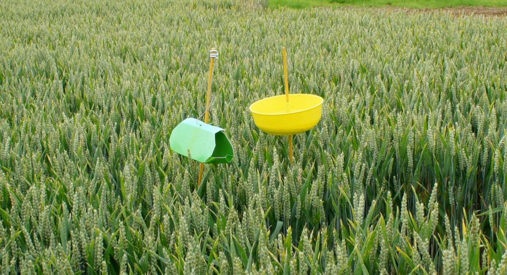 Les pièges à insectes permettent de détecter une éventuelle attaque sur le secteur, et de déclencher les actions nécessaires si besoin.